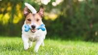 Cómo proteger a tu mascota este 4 de julio
