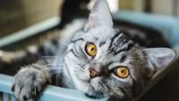 Abre el primer café de gatos de Miami en el que puedes adoptar una mascota