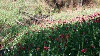 amapola-campos-oaxaca