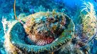 #SuperCoralPlay, el reto para salvar los corales de Florida