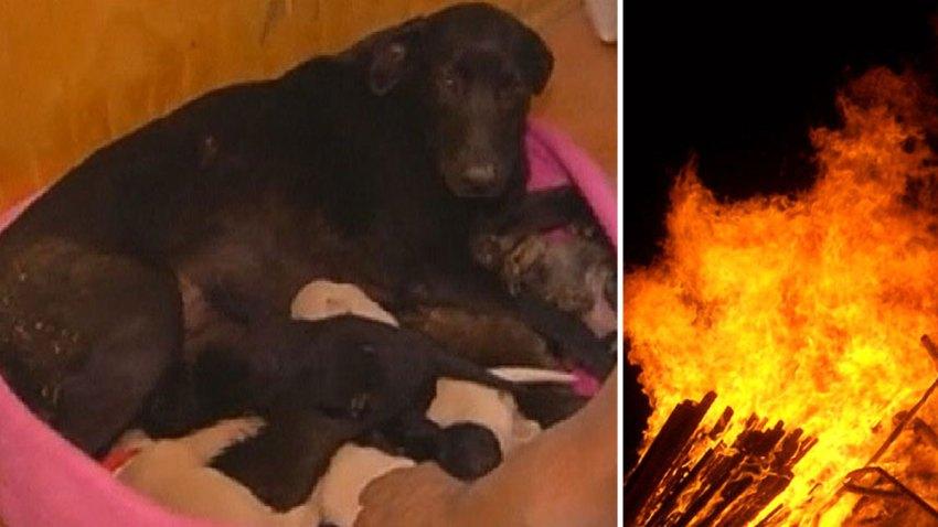 mama-perro-new