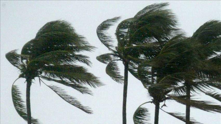 palmeras-tormenta
