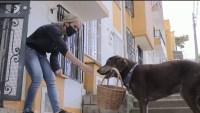 Eros, el perro repartidor que lleva las compras con solo decirle el nombre del cliente