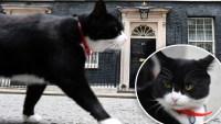 Viral: gato diplomático se jubila tras prestar servicios a la corona británica