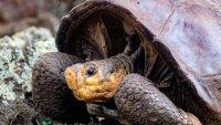 Hallan en Galápagos a tortuga que se creía extinta hace más de 100 años