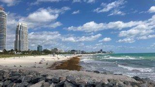 sargazo en una de las playas de Miami