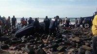 En video: ballena queda varada entre rocas en Puerto Peñasco