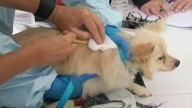 TLMD-ratas-enfermedades-perros-bronx