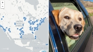 En Vivo: Encuentra un refugio y adopta una mascota
