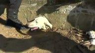 perra-rescatada-1
