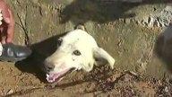 perra-rescatada-portada