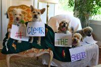 Aquí los animales adpptados durante el evento Desocupar los albergues en este 23 de julio de 2016.