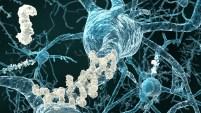 Se estima que en el mundo existen 48 millones de personas afectadas con la enfermedad que deriva en demencia. Te explicamos qué es el Alzheimer.