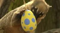 Un zoológico en Londres la organizó con los animales, que terminaron comíendo los coloridos manjares.