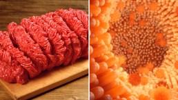 Qué es la peligrosa salmonela y cómo te puede afectar