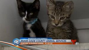 Todo sobre mascotas: Gatitos en adopción