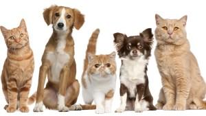 Cruz Roja te enseña a salvar las vidas de tus mascotas