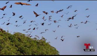 Murciélagos para combatir el zika en Miami Beach