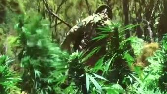 Aprueban uso de marihuana medicinal en escuelas