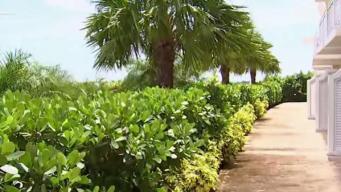 Este es el panorama en Nassau tras Dorian