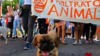Marcha contra el maltrato animal en Cuba