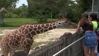 """El Miami Zoo ofrece la promoción especial """"Fun in the Sun"""""""