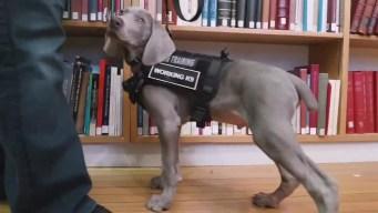 Cachorro a cargo de cuidar obras de arte