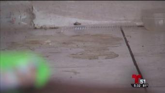 Rescatan a tres niños en casa deplorable en Boynton Beach