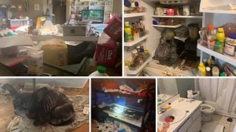 La casa del horror: hallan a niños con 245 animales
