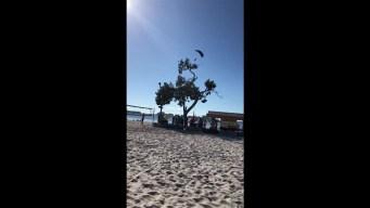 Santa en paracaídas se estrella en playa de Florida