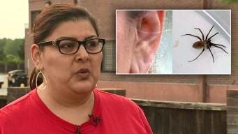 De terror: molestia en el oído resulta ser una araña venenosa