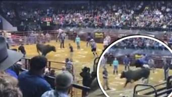 De infarto: toro furioso arremete contra vaqueros y lanza a 2 por los aires