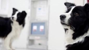 Estudio: ¿tienen moral los animales? mira estos perros