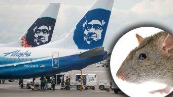 Rata causa pánico en avión y cancelan el vuelo
