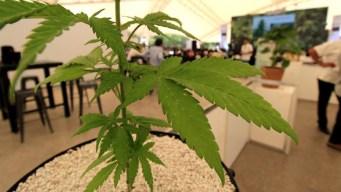 Dueños de Marlboro se meten al negocio de marihuana