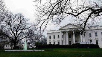 Plaga de cucarachas y ratas en comedores de la Casa Blanca