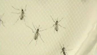 Reportan caso de zika contraído en Miami Dade
