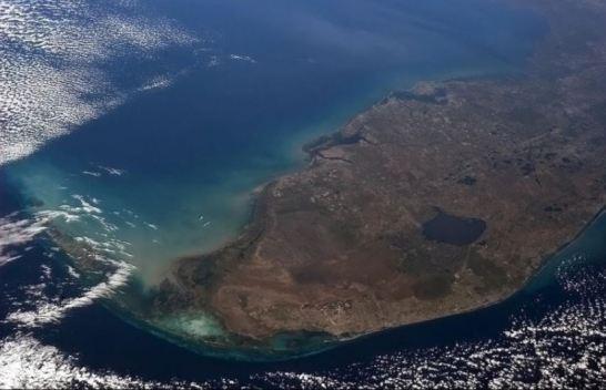 Estado de emergencia por alga tóxica en Florida
