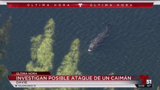 [TLMD - MIA] Caimán arrastra a una mujer a un lago en Davie