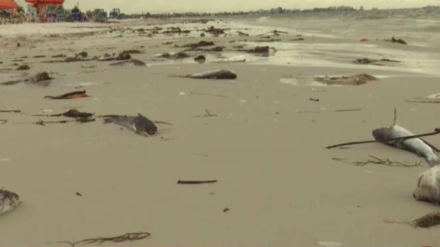 [TLMD - MIA] Crisis de la marea roja en playas de la Florida