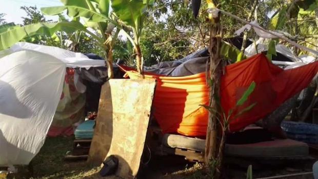 [TLMD - MIA] Cubanos varados en Trinidad y Tobago están viviendo en un platanal