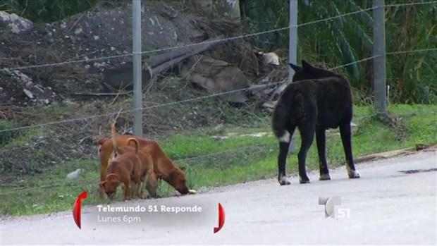 [TLMD - MIA] Perros abandonados, un problema en ciertas áreas del condado
