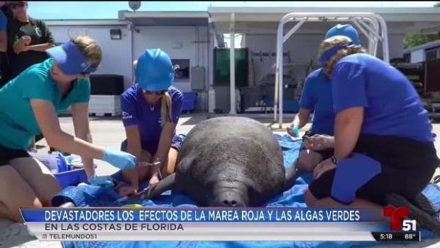 [TLMD - MIA] Efectos de la marea roja en costas de Florida