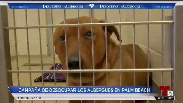 [TLMD - MIA] En Palm Beach rescatan mascotas de los albergues