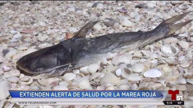 [TLMD - MIA] Extienden alerta de salud en Florida por marea roja