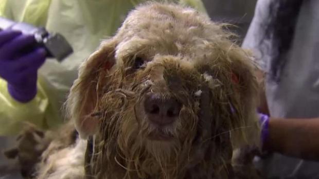 [TLMD - MIA] Rescatan un centenar de animales víctimas de maltrato