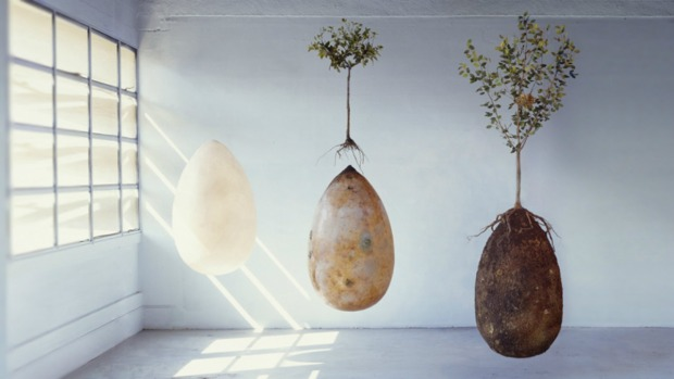 ¿Adiós al ataúd? Cenizas de muertos dan vida a las plantas