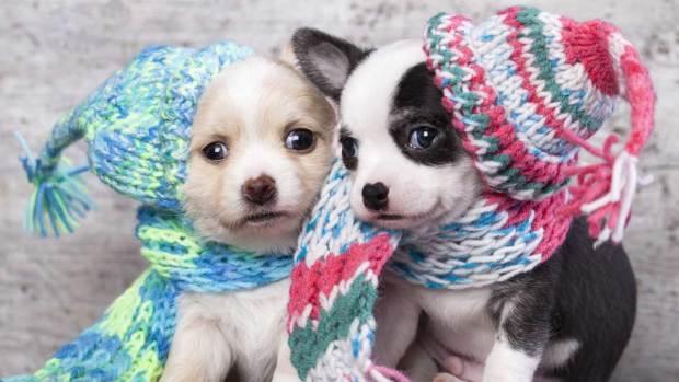 Fotos: Consejos para proteger a tu perro en el invierno