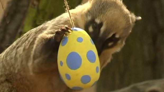La búsqueda más insólita de huevos de Pascua