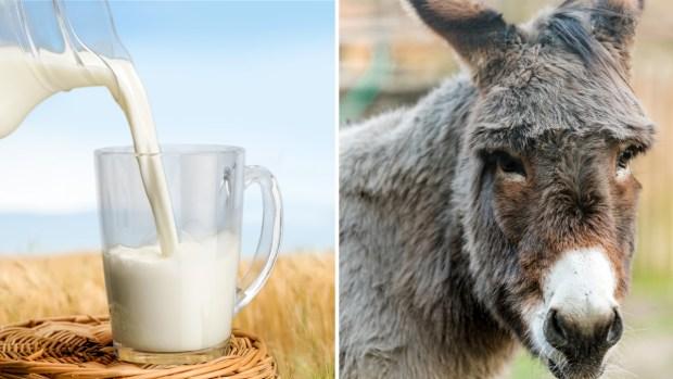 Los beneficios de la leche de burra, un secreto de gran altura